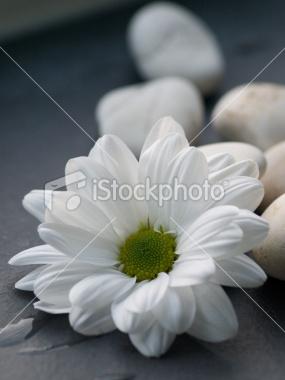 White Flower Pebbles